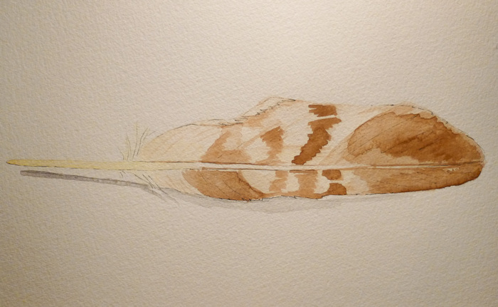 Golden Eagle feather